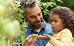 Father and child picking grapes